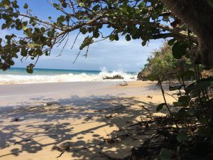 Small beach with overgrown trees, and crashing waves