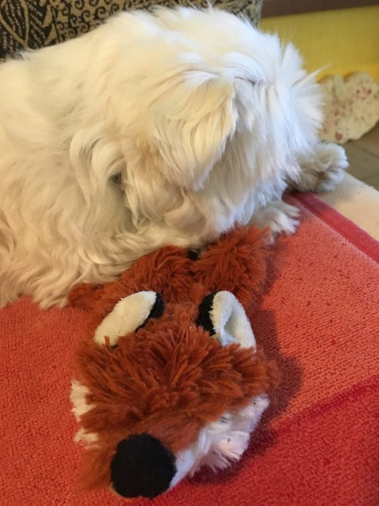 Dog with toy fox