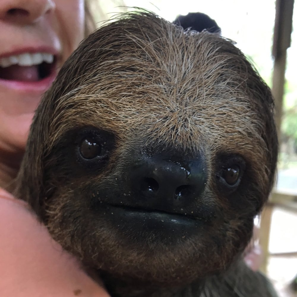 Close-up of sloth face, Deb holding him and smiling in the background