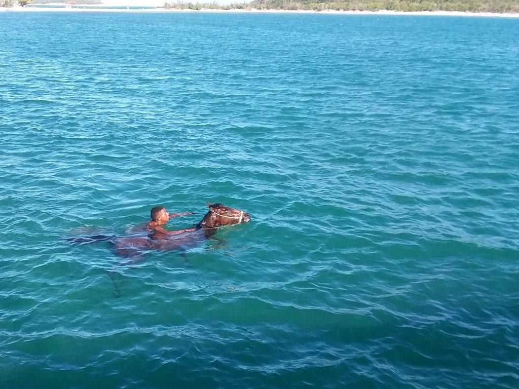 Man riding horse in the water - horse is swimming