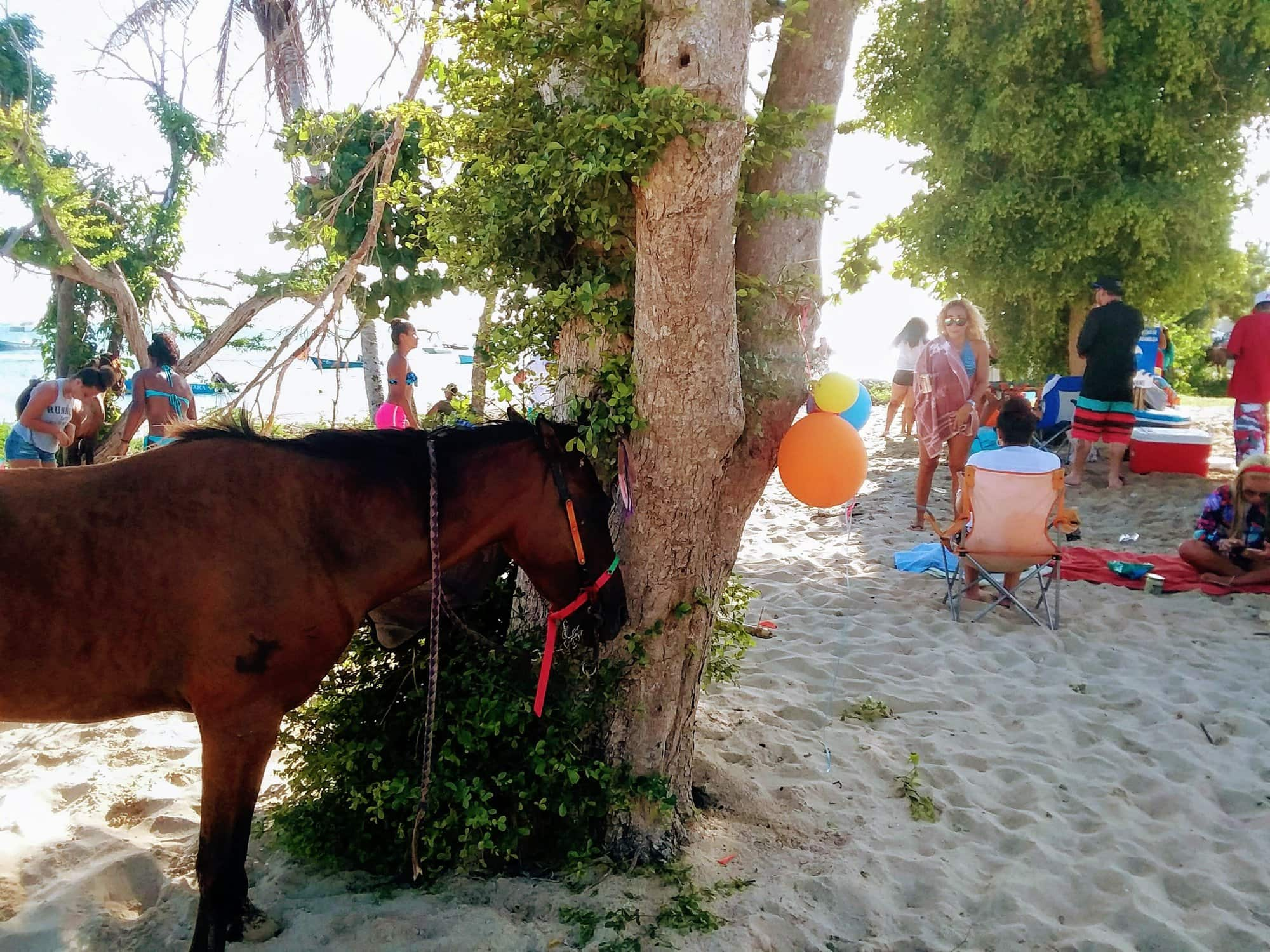 Horse tied to a tree at a beach party