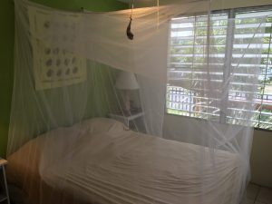Mosquito netting hanging over the bed