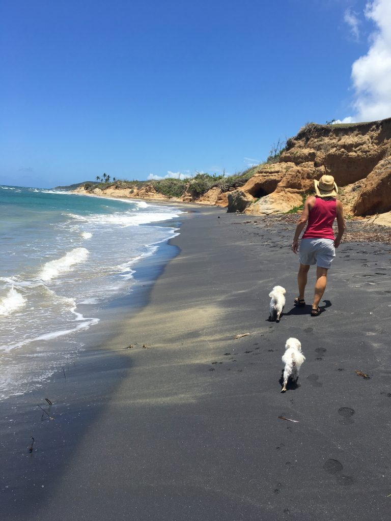 Black sand and white doggies