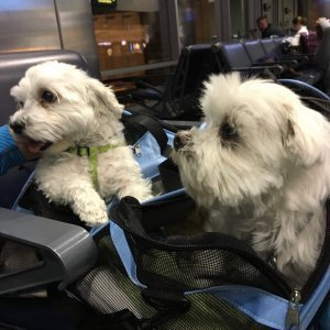 DogsinDENAirport